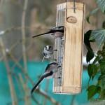 Die pfiffigen Schwanzmeisen konnten sie auch beobachten und fotografieren.