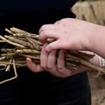 Stöckchen und auch Bambusstäbe werden zusammengebunden.