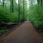 Unser Wald hat ein grünes Kleid angezogen.