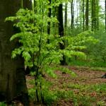 Das frische Grün ist einfach ein Gedicht.