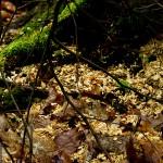 Auf dem Boden am Baumstamm sieht man die Holzspähne des Zimmermanns. :-)