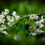 Blütenzauber im Wald