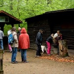 Zurück am Vereinshaus wird der Baumstumpf und der Eulengrill auf Spechtlöcher untersucht.