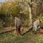 Beratschlagung, in welchem Abstand die Sträucher gepflanzt werden.