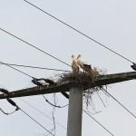 Das Nest scheint noch lange nicht fertig zu sein.