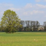 Zur linken Seite nach dem Waldgebiet öffnet sich eine schöne Auenlandschaft.