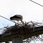 Lilli baut am Nest, ihr Partner hält eine kleine Siesta.