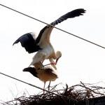 Beide tun das, wozu sie sich ein Nest gebaut haben.