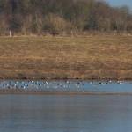 5 Wasservögel am gegenüber liegenden Ufer