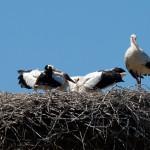 10. Die Lage entspannt sich im Nest.