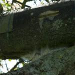 29 Selbst an den Steinkauzröhren sahen wir die Gespinste.