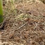 20) Nestmaterial liegt jetzt am Boden.