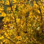 9 Goldener November