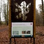 19. Waldfenster mit Durchblick Hessischer Löwe