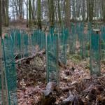 16. Neue Bäume wurden gepflanzt und geschützt.