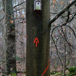 13. Dieser Baum wird gefällt, Hinweispfeil auf einen Nistkasten