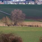 18.01.19 Das 1. Storchenpaar ist da, Bornwiesen Büdesheim