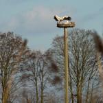 19.02.19 Das Büdesheimer Paar, Freude bei der Ankunft des Partners