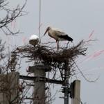 03.03.19 Das Nest wurde weiter ausgebaut.