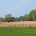 Bornwiesen, 14.04.19, die Landschaft erstrahlt in neuem Grün.
