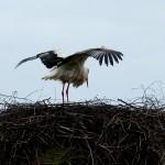 9) Flügel ausschütteln vom vielen Wasser