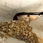 1 Kunstvoller Nestbau