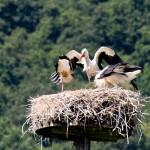13 Landung im Nest