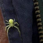 8. Auch eine Krabbespinne wollte mithelfen.