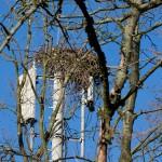 35) Das Nest auf dem Funkmast